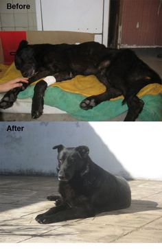 Rescued dogs are family: Woman rescues dog bleeding to death at train station » DogHeirs | Where Dogs Are Family « Keywords: Rescued dogs are family, Buenos Aires, argentina, train station/ 9/16/2013
