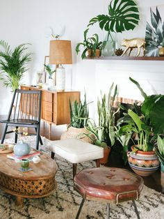 7 Things You Need To Create An Indoor Plant Paradise