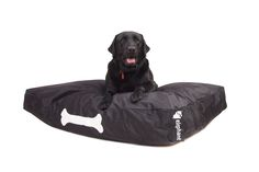 You are not the only one who loves the comfort of beanbags! You dogs love them too! Now thanks to the Elephant Dog Bed Large - Urban Black your pampered. Bean Bag Bed, Bean Bag Chair, Pet Dogs, Pets, Beds For Sale, Dog Toys, Large Black, Your Pet, Elephant