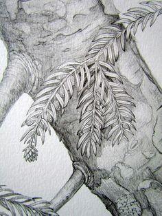 Botanical illustration. Pencil drawing by Gábor Emese hungarian artist. From www.gaboremese.hu
