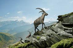 Brigels Obersaxen Val Lumnezia Ilanz im Sommer, Surselva, Graubünden, Schweiz