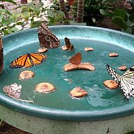 Hometalk :: Encourage butterflies to visit your yard and pollinate your plants by…