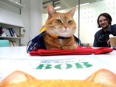 """Bob promoting his new children's book """"My Name is Bob""""  - from FB page James Bowen & Street Cat Bob"""
