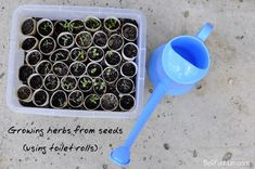 Growing herbs from seeds using toilet rolls {from Be a Fun Mum}