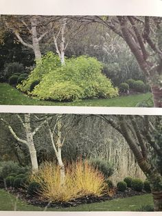 Yellow twig dogwood on corner of border Michigan Landscaping, Modern Landscaping, Landscaping Plants, Outdoor Landscaping, Rustic Gardens, Outdoor Gardens, Landscape Architecture, Landscape Design, Yellow Twig Dogwood