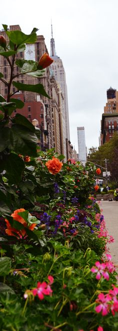 Nature + Empire State - New York  #newyork #empirestate #novaiorque #manhattan #bigapple #eua #usa #ny #nyc #phototakenbyme