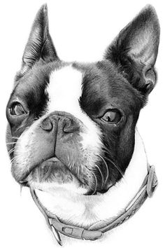 Hand drawn pencil portrait drawing of a dog from a photograph. Transform a digital photograph of your beloved pet into a personal pencil illustration, whether you have a favourite family print that you'd like reimagined as a pencil drawing, I can use your imagery as inspiration for a unique work of art that's exclusive to you.
