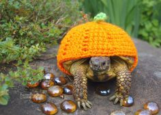 Knitwear for turtles.  Because turtles get cold too.