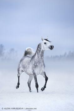 Beautiful horse in a beautiful picture!