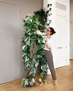 Indoor Vertical Gardening Tips and Ideas Organic gardening isn't always about food to eat. Some people enjoy growing flowers and other forms of plant life as well. You can grow anything bereft of harmful chemicals as long as you're d Tall Plants, Potted Plants, Indoor Planters, Indoor Garden, House Plants Decor, Plant Decor, Planting Succulents, Planting Flowers, Plant Aesthetic