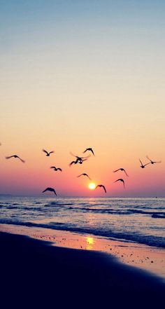 Peaceful beach wallpaper with seagulls #iphone #ipad #android