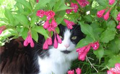 My cat Willie. Eileen, Port Wing, WI - 8/3/2015