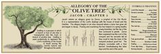 Ideas for Teaching Jacob 5: The Olive Tree Allegory | Mormon Share