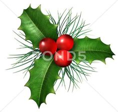 holly leaves: Christmas holly with with red berries and green leaves with evergreen pine needles isolated on a white background as a winter holiday symbol and seasonal decoration Christmas Day Lunch, Christmas Leaves, Christmas Poems, Christmas Art, Xmas, Christmas Ornaments, Holly Christmas, Christmas Island, Christmas Settings
