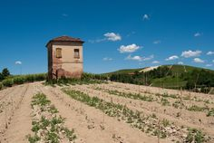 """Ciabot (""""little house for tools"""" in Piedmontese language) of Roero"""