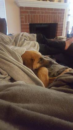 My city has free adoptions til Sunday. Meet Atticus!