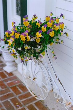 pansies by slothic, via Flickr