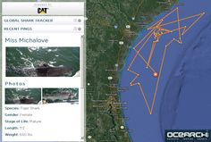 Click through to ocearch.org for NGSS curriculum on sharks miss michalove