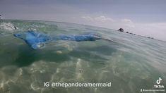 Mermaid Videos, Mermaid Gifs, Mermaid Hair, Mermaid Island, Professional Mermaid, Water Nymphs, Mermaid Pictures, Clearwater Florida, Vintage Mermaid