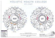iridology chart | Download Free Iridology Eye Chart