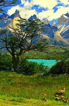 Magestic Cuernos in Torres del paine, Chile - Explore the World with Travel Nerd Nici, one Country at a Time. http://TravelNerdNici.com