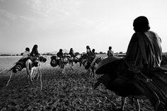 Darfur. Marcus Bleasdale