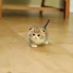 Cute Little Kittens, Cute Baby Cats, Cute Kittens, Cats And Kittens, Cute Dogs, Cute Kitten Pics, Kitten Gif, Kittens And Puppies, Kitty Cats
