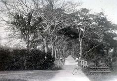 Cultuurtuinlaan in de Cultuurtuin. Datum: Locatie: Cultuurtuin, Paramaribo Vervaardiger: Augusta Curiel Inv. Nr.: gn-17-17 Fotoarchief Stichting Surinaams Museum