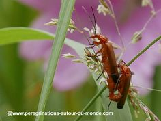 Petits #insectes en pleine #reproduction #nature #natureonly #naturelove #natureporn