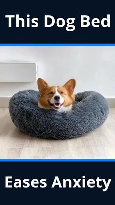 Pet Beds, Dog Bed, Dog Anxiety, Dog Items, Anniversary Sale, My New Room, Dog Care, Cute Baby Animals, Fur Babies