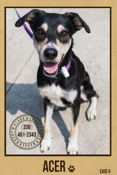 """URGENT!!! PLEASE RESCUE THIS SWEET BOY """"ACER""""(very sweet boy)!!!! FOUND IN STARK COUNTY...NOW ADOPTABLE!!! SEE VIDEO!!!! https://www.petfinder.com/petdetail/29864530/"""
