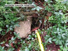 How to Get Rid of an Underground Yellow Jacket Nest by advancedsurvivalguide #Yellow_Jacket_Nest