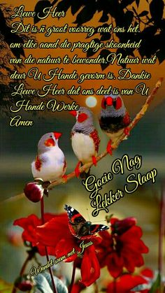 Good Night Blessings, Good Night Wishes, Prayer Quotes, Bible Quotes, Evening Greetings, Afrikaanse Quotes, Goeie Nag, Angel Prayers, Goeie More