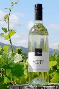Allan Scott Sauvignon Blanc is one of my favorite whites to have any time that you can just pick up at most grocery stores. Green apple-y and refreshing.