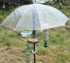 Squirrel Baffles Bird Feeders Homemade - WoodWorking Projects & Plans