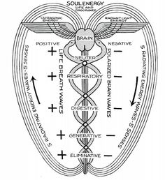 This video is a monologue describing and elucidating the services and endeavors in Polarity Therapy of Jeevan Sahaya healing studio. Der Klang Des Herzens, Les Chakras, Sacred Geometry Symbols, Spirit Science, Chakra Meditation, Spiritual Meditation, Kundalini Yoga, Book Of Shadows, Knowledge