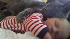 un-gato-en-tu-vida-bebe-dormir-juntos