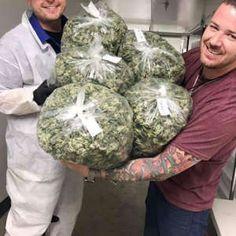 Buy og kush and medical marijuana online - Cannabis Dispensary Store Cannabis Seeds Online, Cannabis Seeds For Sale, Cannabis Oil, Growing Marijuana Indoor, Cannabis Growing, Kingston, Shops, Medical Marijuana, Shopping