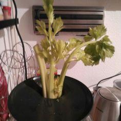 Welk sapje wordt er door Sandra klaargemaakt voor vrijdag? Morgen de foto! #JoeCrossChallenge #slowjuice