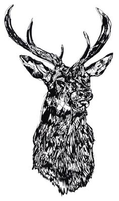 Edinburgh Printmakers Stag Head MMXII by Susie Wright £100.00