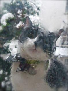 Let Me In !