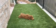 Image result for grass rugs for dog kennel