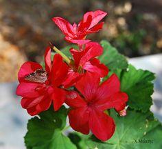 Φωτογραφία - Φωτογραφίες Google Photo And Video, Google, Plants, Planters, Plant, Planting