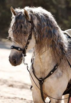 Oftentimes people do strange things on their hair, but these horses hairdos, straight from the equestrian fashion industry, are just unimaginable! Most Beautiful Horses, All The Pretty Horses, Beautiful Creatures, Animals Beautiful, Animals And Pets, Cute Animals, Wild Animals, Baby Animals, Andalusian Horse