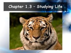 This powerpoint and Guided Notes set is used as an introduction to biology. The powerpoint and guided notes correspond to Section Studying Life from Miller and Levine. Biology Textbook, Biology Teacher, Daily Objectives, Branches Of Biology, What Is Science, High School Biology, Android, Wildlife Conservation, Free Download