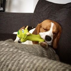 """""""Someone just got really tired anyone else falling asleep with the toys in their mouth?"""