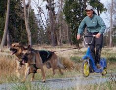 Carting with Your Dog (Sulky or Sacco) - German Shepherd Dog Forums