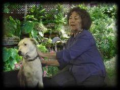 Barbara Mariano Performs Animal Reiki