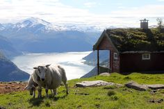View from Tafjord, Norway by @Satu VänskäWestgarth as seen on http://todestinationunknown.com/blog/2012/08/15/life-in-pictures-even-the-sheep-are-celebrating/