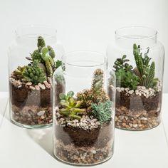 FLO atelier botânico Mais